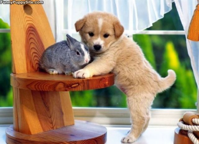 cute_puppy_with_a_bunny